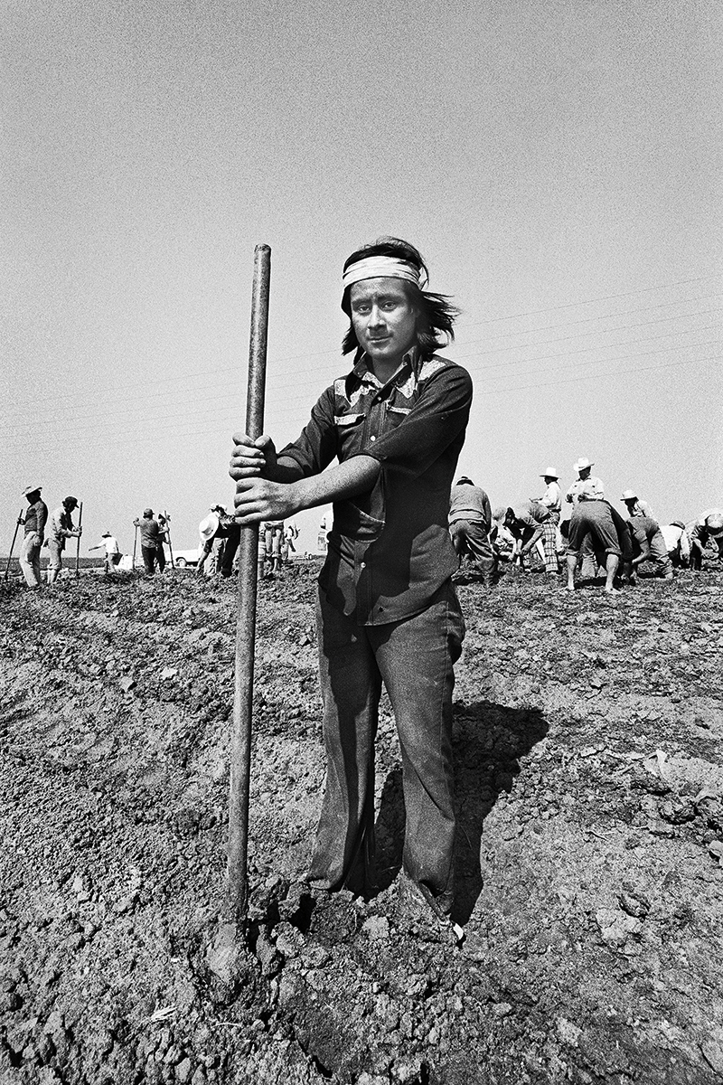 Fieldworker with Punching Rod