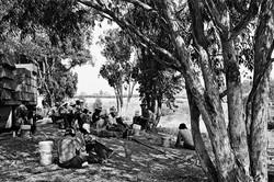Lunch Break under Eucalyptus, 1979