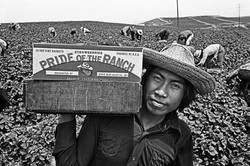 Pride of the Ranch , 1979