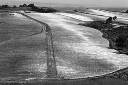 Plastic Covered Tomato Field #1, 1979
