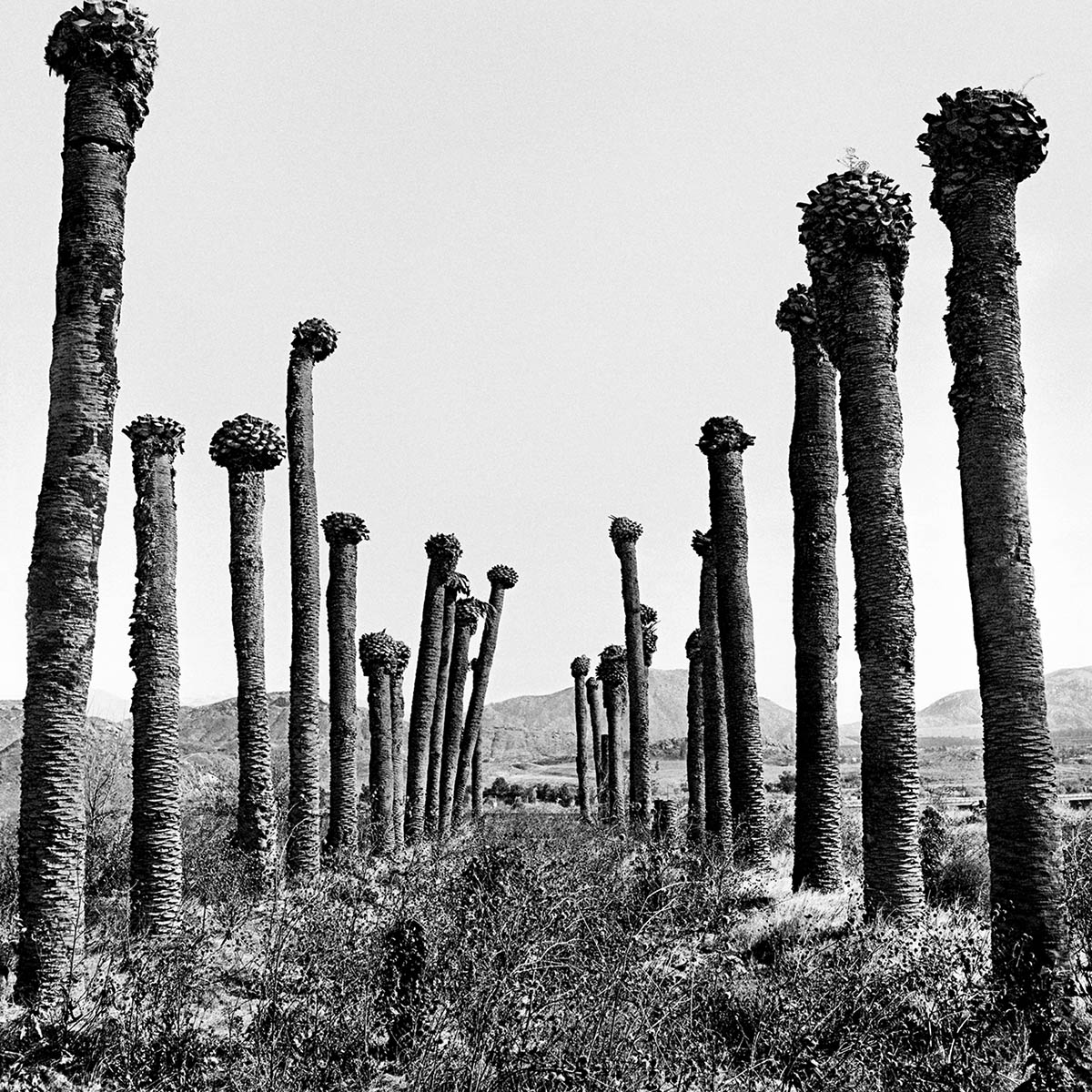 Abandoned Industrial Park, Colten, California, 1995