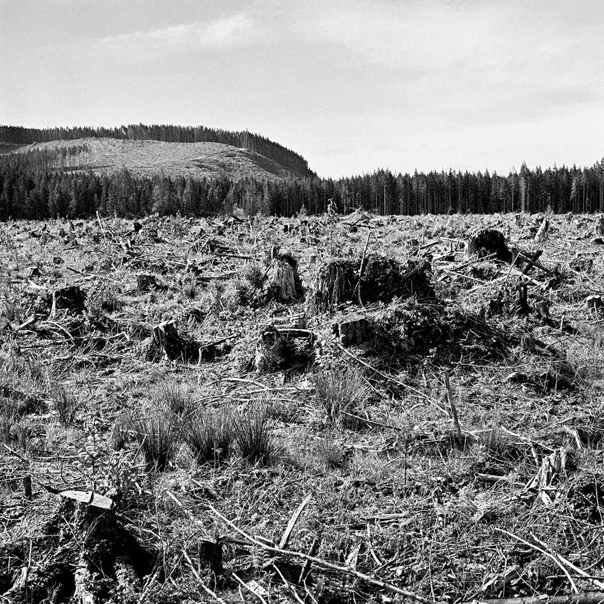 Clear Cut, Olympic Peninsula, Washington, 1996