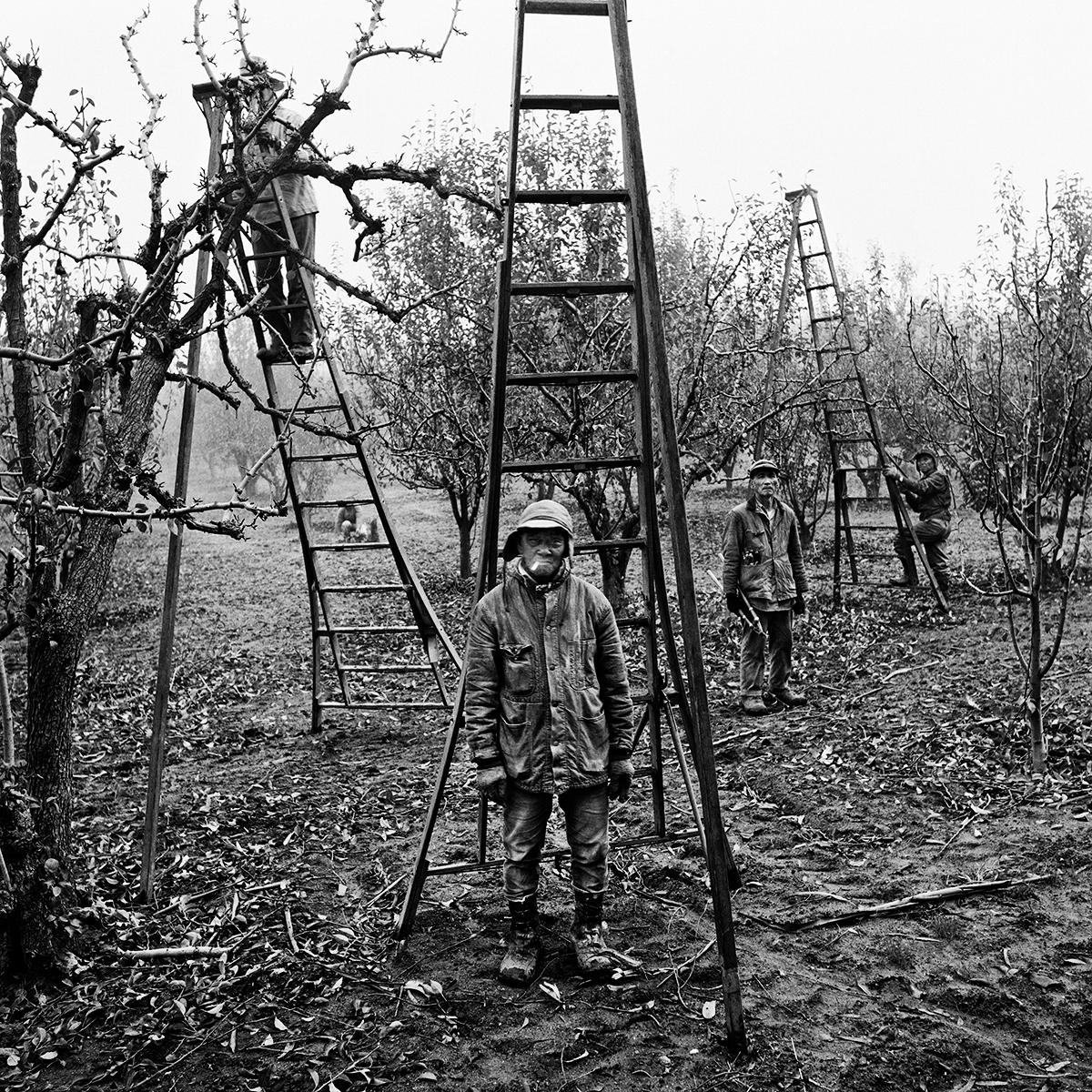 Pear Pruners, 1967