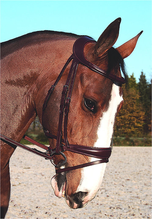 Dy'on Difference Dressage Noseband Bridle