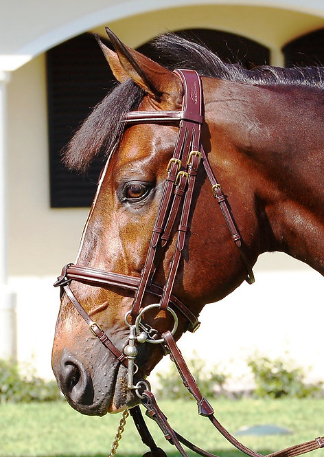 Dy'on Double Bridle with Removable Flash
