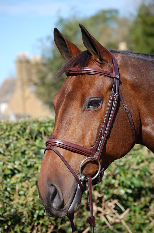 Dy'on New English Flash Nosband Bridle
