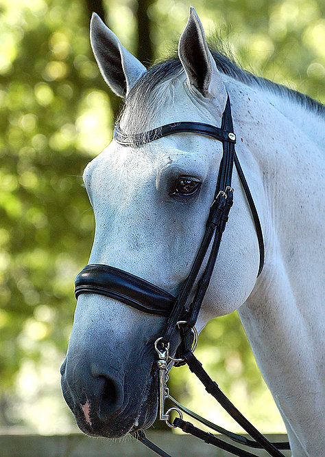 Dy'on Dressage Large Crank Noseband Double Bridle