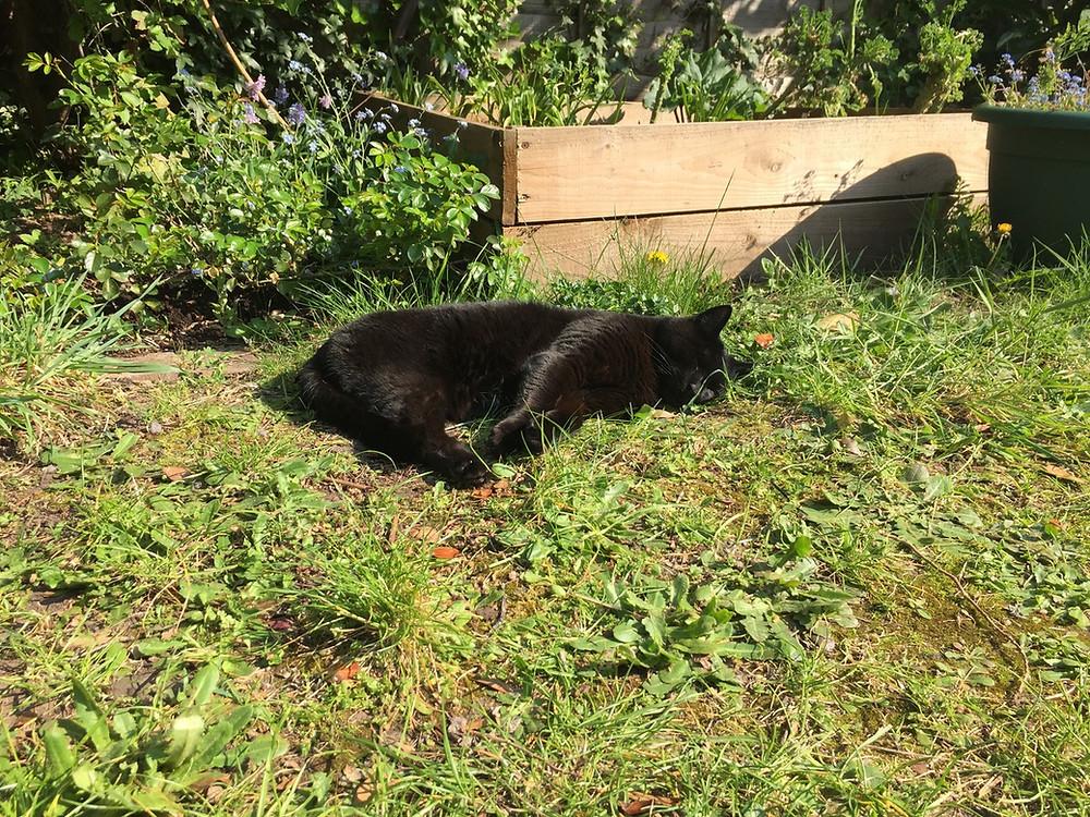 Photo: Caspar the cat
