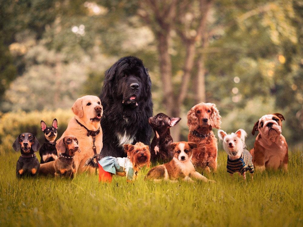 Tierischer Familienzuwachs?