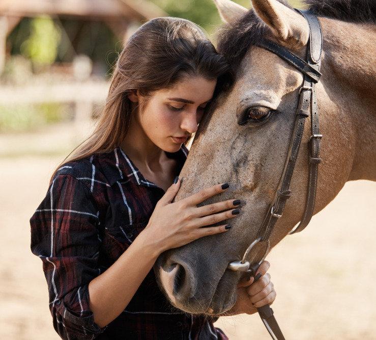5er Block Pferdetraining
