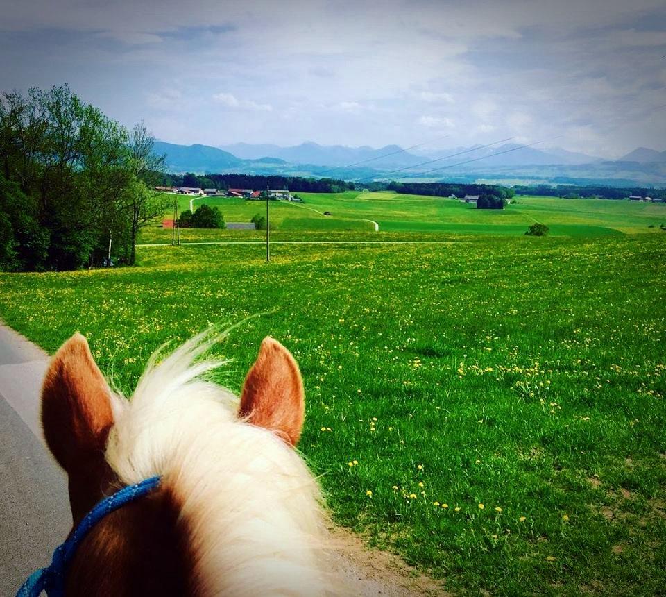 Sicherer Ausritt mit eigenem Pferd