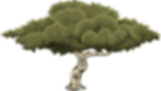 tree-576863.png