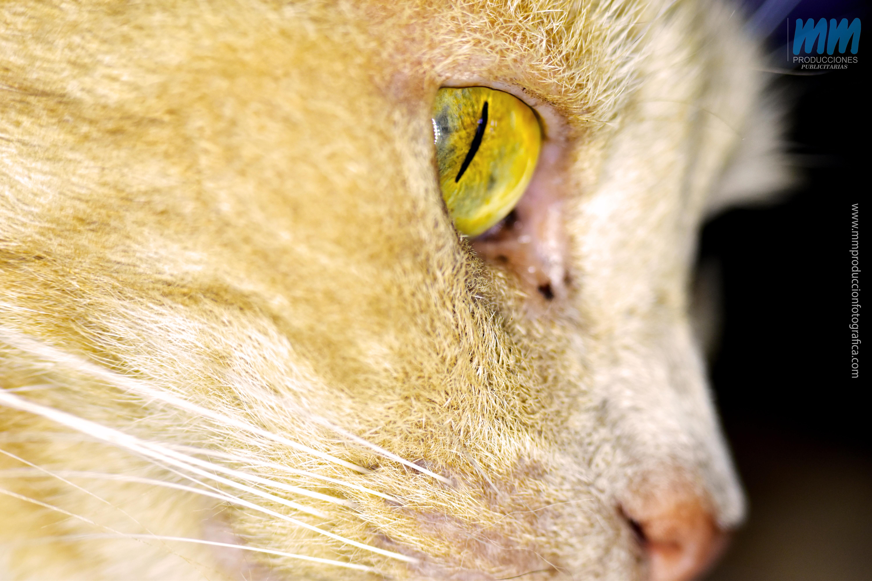 gato rusa 7