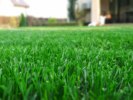 How to Properly Care for your St Augustine Lawn