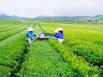Câu chuyện về dinh dưỡng xanh 100 tuổi Nhật Bản