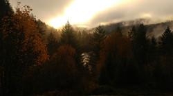 McKenzie River Morning