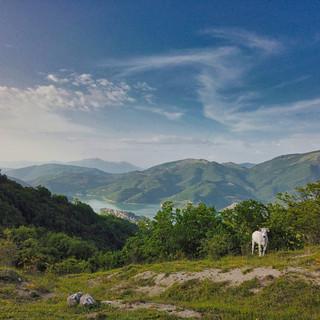 T-A 2019 Turano e Mucche.jpg