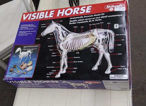 Baraboo - Model visible horse