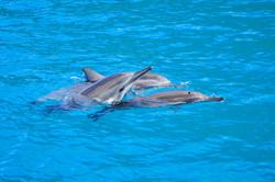 DolphinsAbove-5