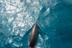DolphinsAbove-9