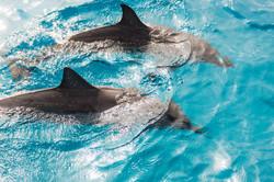 DolphinsAbove-8