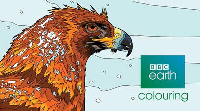 BBC Earth Colouring App - Trailer