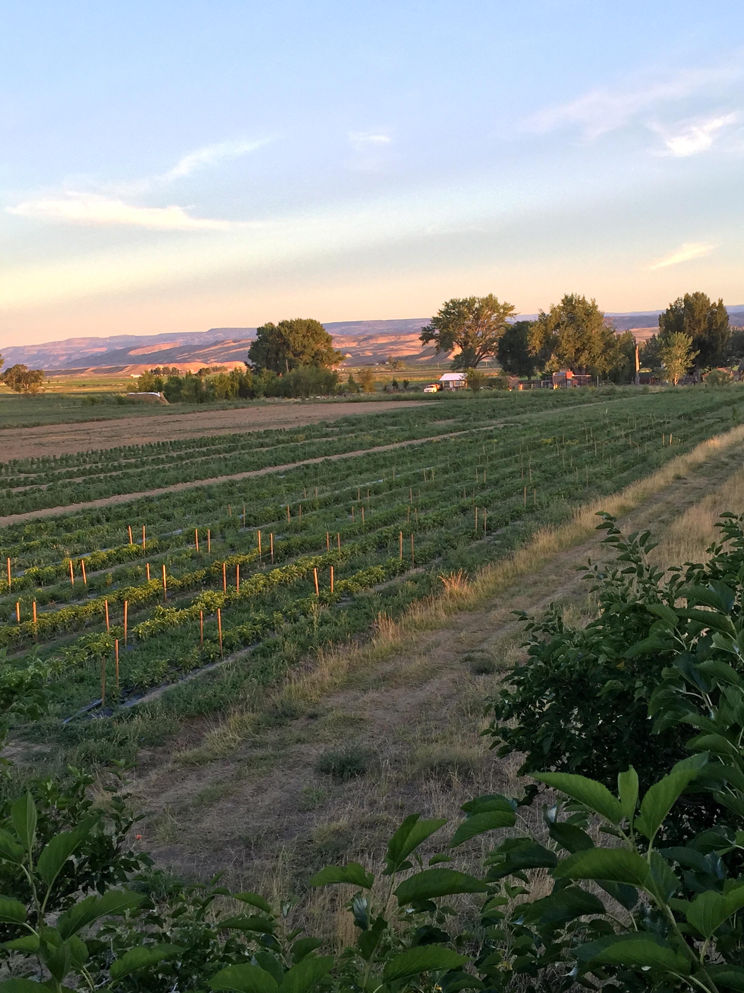 field from tree