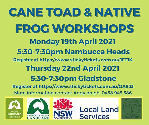 Cane Toad Native Frog Workshop Nambucca