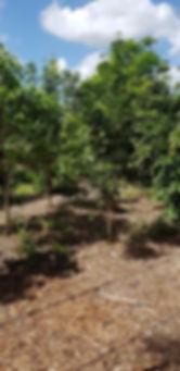 Arboretum Plantings - web.jpg