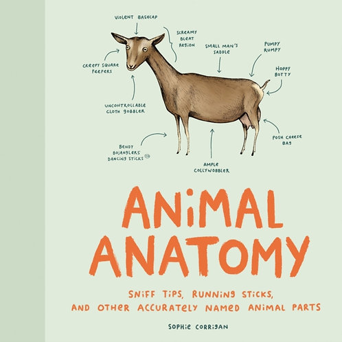 Sophie Corrigan - Animal Anatomy (HARDBACK)