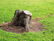 digwork-landscaping-stump-removal.jpg