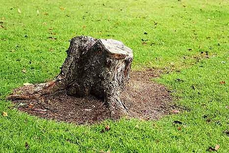 digwork-landscaping-stump-removal.jpg