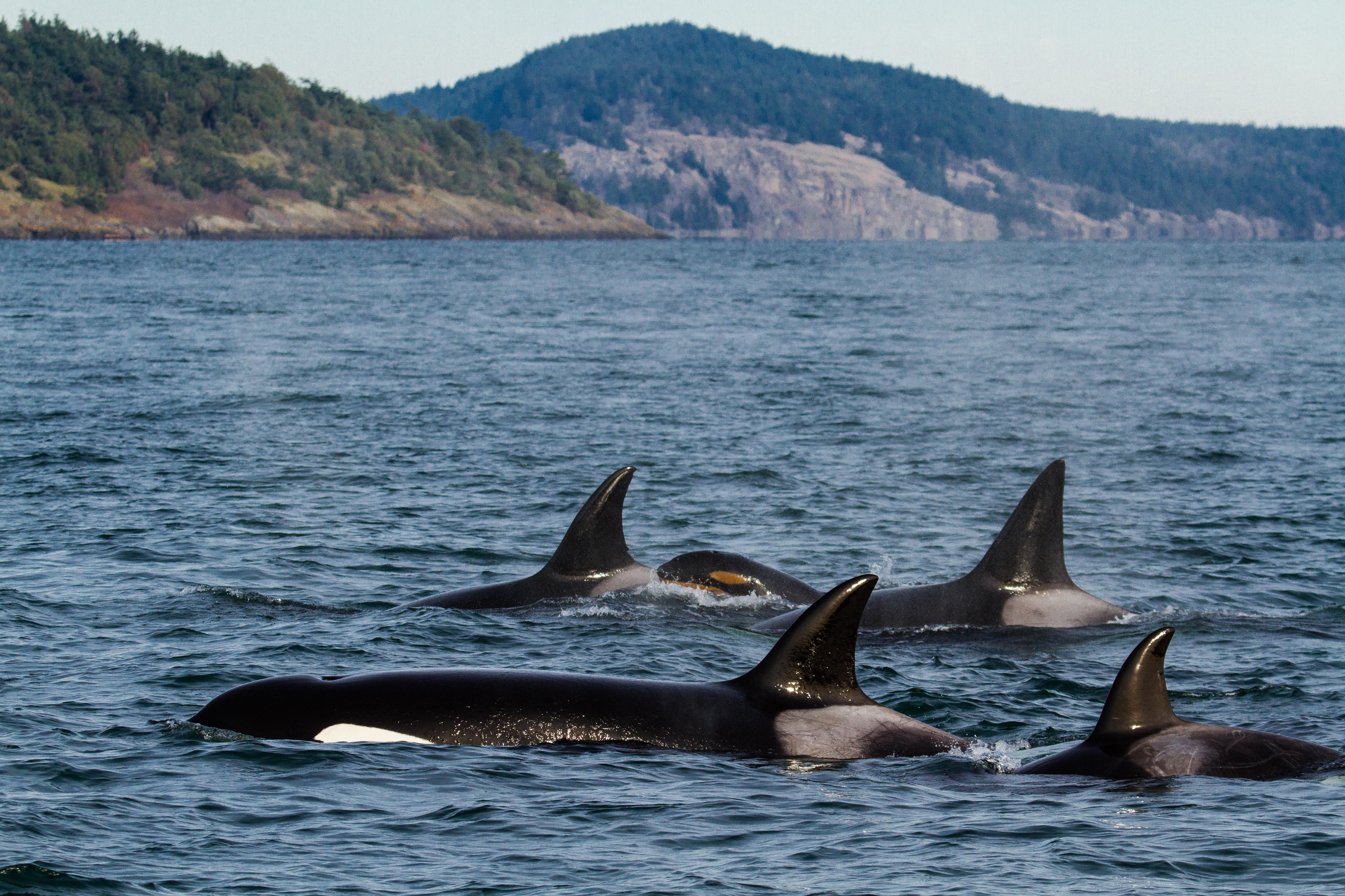 Orcas Tight Group Baby.jpg