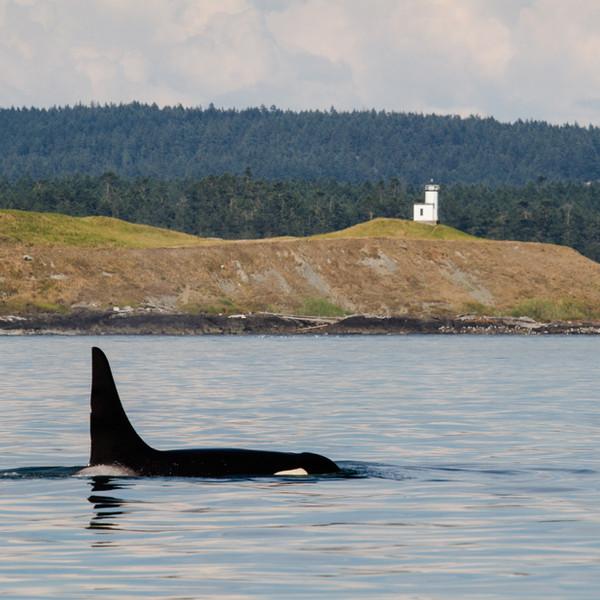 Orca Cattle Point Light 2.jpg