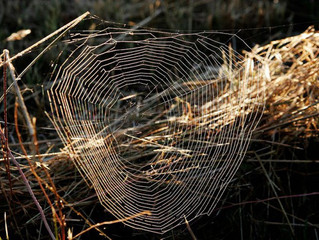 Bientôt des tissus synthétiques imitant la soie d'araignée