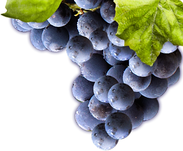 side_grapes.png