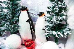 Penguins galore