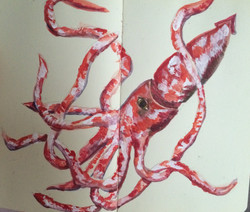 first giant squid to make eyecontact