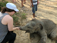 Playing with a 4 month old baby elephant