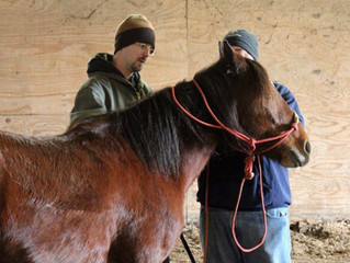 Horses are Helping Local Veterans Heal