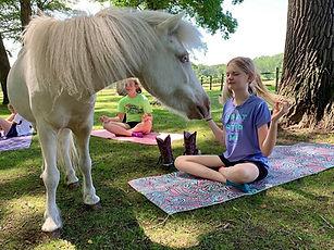 pony meditate.jpg