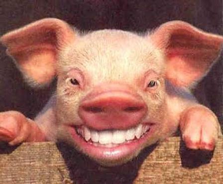 KISS A PIG.jpg