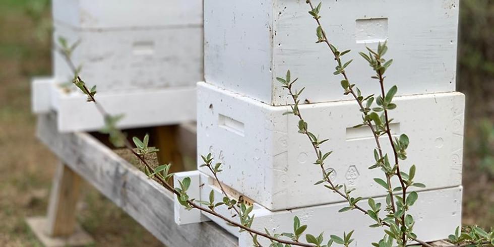 June 24th Beekeeping 101