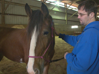 Horses Help Local Veterans Heal After War