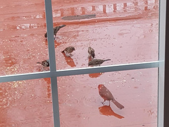 Birds Also Eat in the Rain