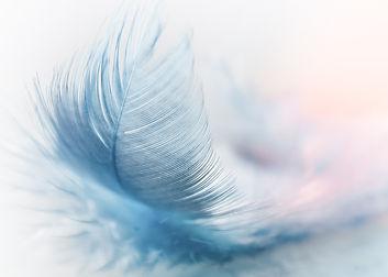 feather-3010848_1920 - Copy.jpg