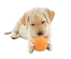 Hund_-_Welpe_Ball-removebg-preview.png