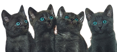 cat-3613449_640-removebg-preview.png