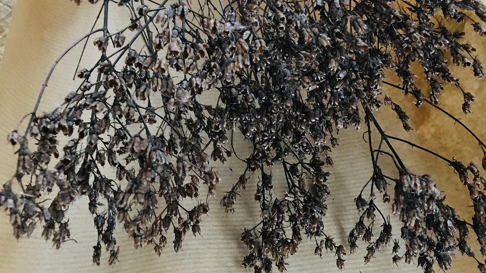 Bouquet fleurs séchées noires naturelles