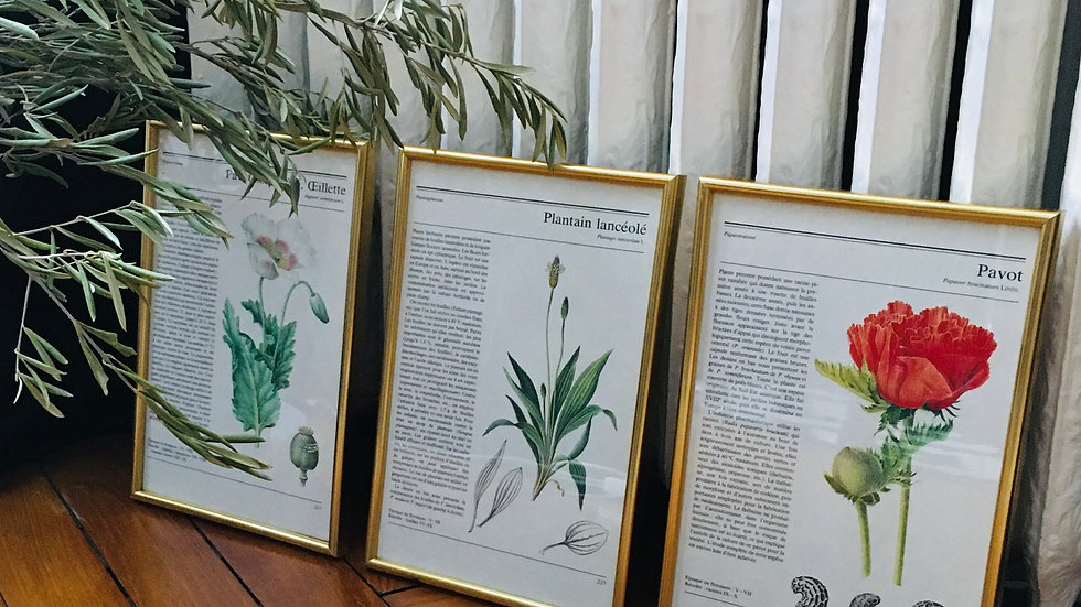 Lot 3 illustrations botanique vintage cadre doré 2